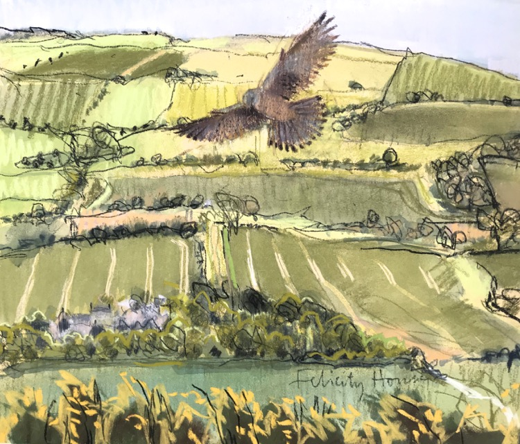 Kestrel over the Purbeck Fields